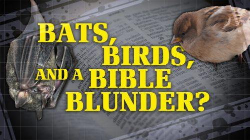 Bats, Birds, and a Bible Blunder?