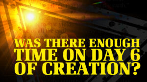 Was There Enough Time on Day 6 of Creation?