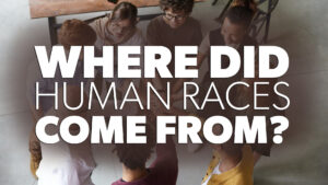 Where Did Human Races Come From?