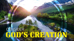 Wonders of Creation: Consider God's Creation