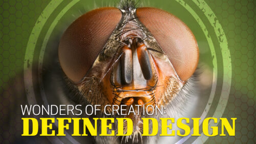 Wonders of Creation: Defined Design