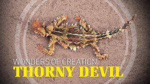 Thorny Devil Lizard | Wonders of Creation